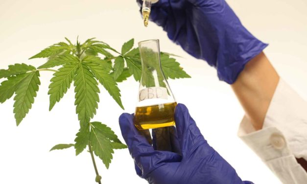 Regulated Production Of CBD. What Manufactures Should Know?